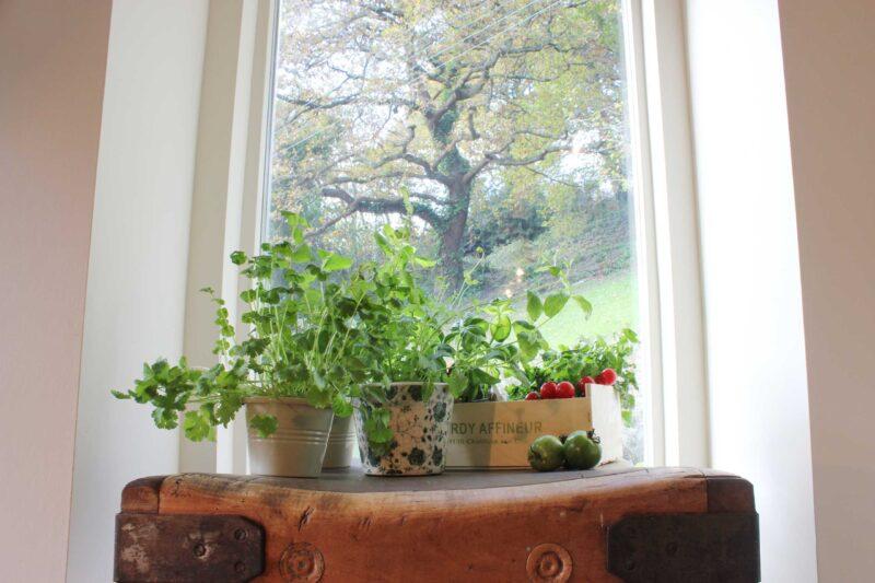 Kitchen herbs on butchers block